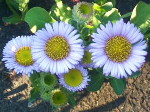 091016-flower1