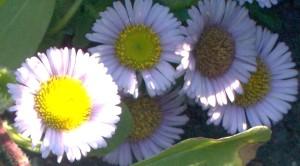 091016-flower2