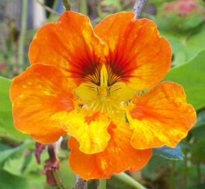 091316-flower1