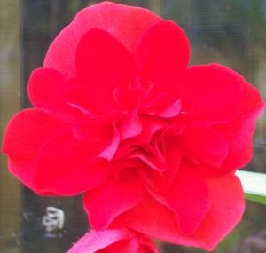 091316-flower10