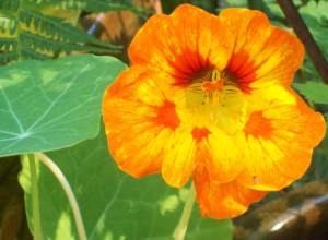 091316-flower11