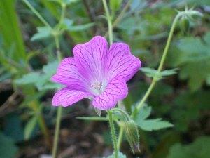 091316-flower12