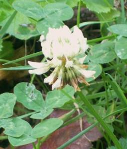 091316-flower2