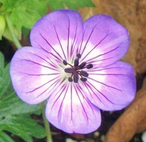 092216-flower3