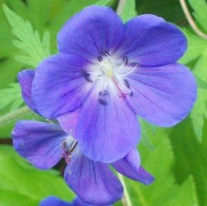 092216-flower6