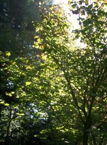 092616-tree