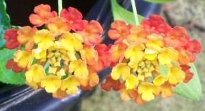 092716-flower01