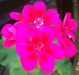 092716-flower02