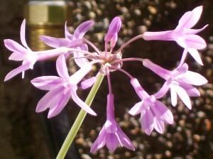 092716-flower07