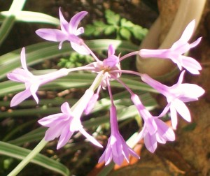 092716-flower08