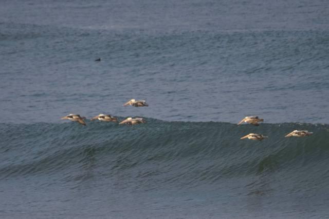 093016-ken-gagne-pelicans