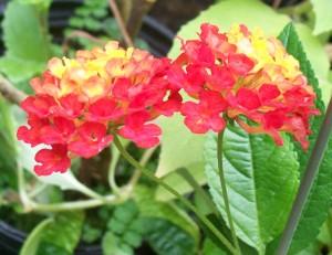 100416-flower1