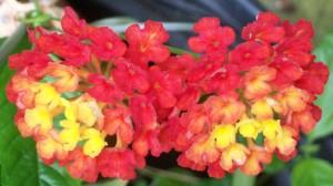 100416-flower2