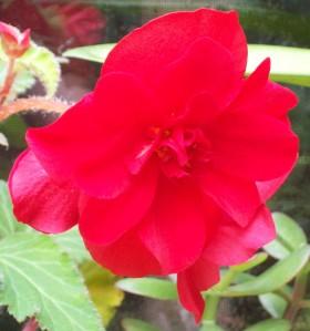 100416-flower3