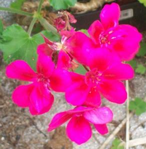 100416-flower4