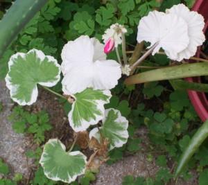 100416-flower5