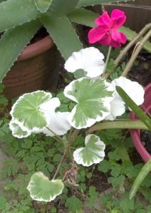 102016-flower1