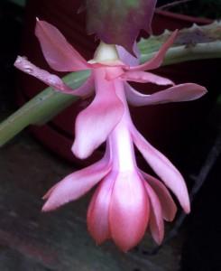 102016-flower3