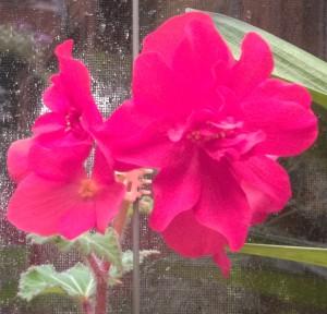 102016-flower4