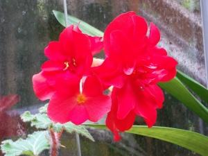 102016-flower5