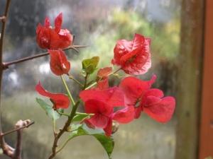 102016-flower6