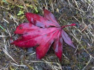 102016-leaf