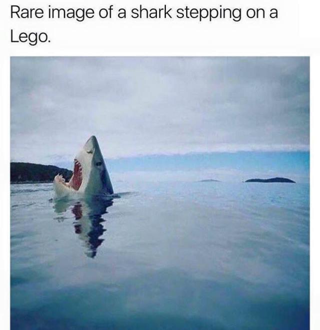 Lego shark funny