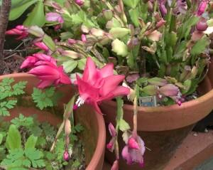 11-10-16-flower1