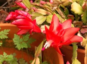 11-10-16-flower2