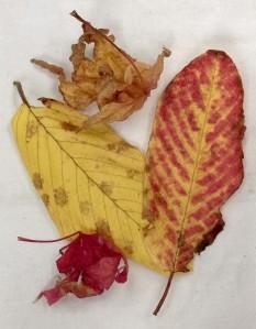 110616-leaves