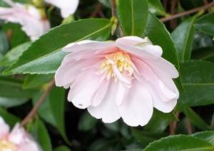 110716-flower1