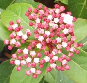 110716-flower5