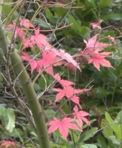 110716-leaves2