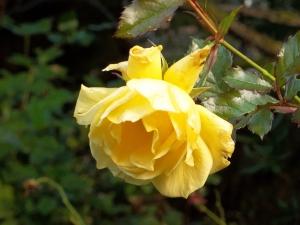 111916-flower15