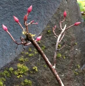 111916-flower18