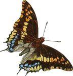 butterfly-motif-bug-05