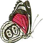 butterfly-motif-bug-07