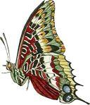 butterfly-motif-bug-08