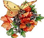 butterfly-motif-bug-09