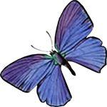 butterfly-motif-bug-10