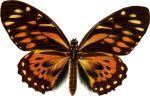 butterfly-motif-bug02