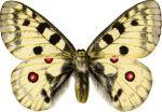 butterfly-motif-bug03