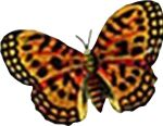 butterfly-insect-motif-bug-18