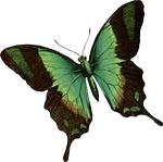 insect-butterfly-motif-bug-20