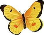 insect-motif-butterfly-bug-13