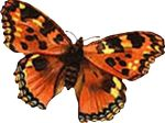 insect-motif-butterfly-bug-15