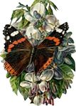 insect-motif-butterfly-bug-16