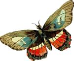 insect-motif-butterfly-bug-17